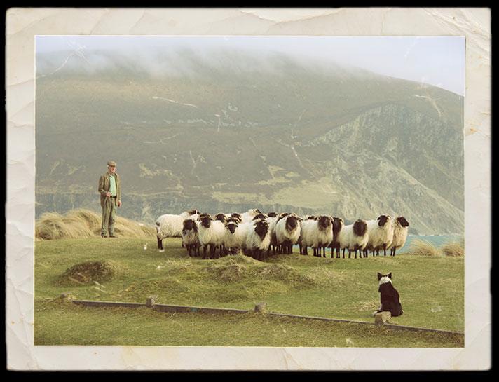 Mcloughlin_Lamb